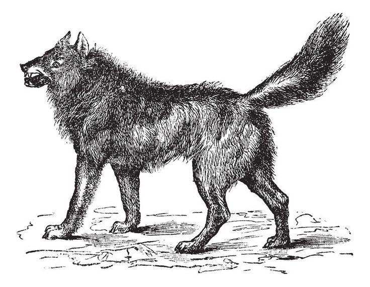 How To Draw Black Fur On An Animal | www.drawing-made-easy.com | #drawing #blackfur
