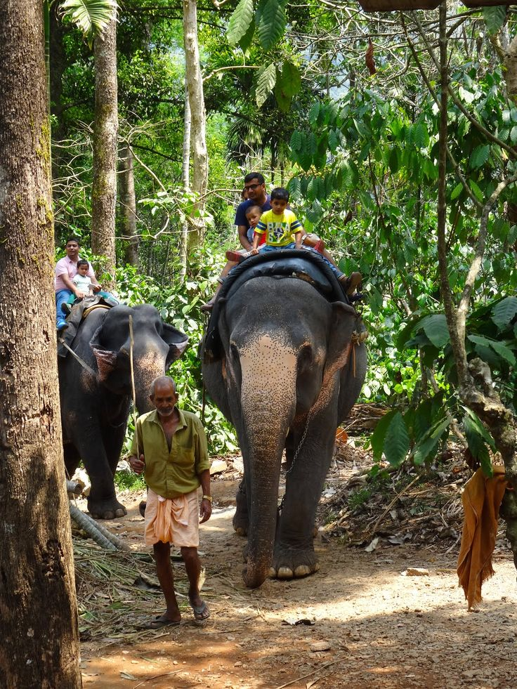 25+ best ideas about Munnar on Pinterest   Kerala, India ...