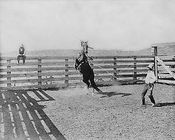 Old West Cowboy & Horses Bonham Texas 1910 Photo Print for Sale