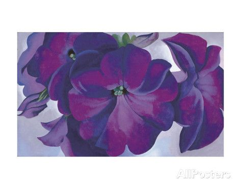 Petunias, c.1925 Prints by Georgia O'Keeffe at AllPosters.com