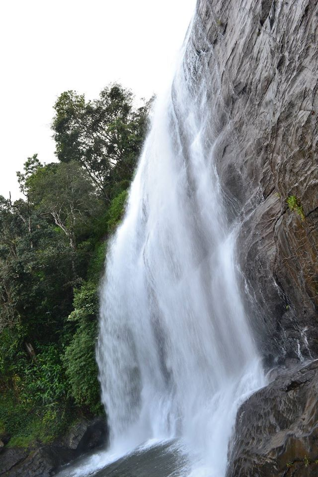 Amazing Trek to Tadiandamol Peak and Waterfall Rappelling at Chelavara Falls >>>Coorg is surrounded by the scenic Western Ghats offering adventurers to explore the landscape and vast jungles. Coorg is located around 274 km from Bangalore and the Tadiandamol Peak is the highest peak in the area. The location is surrounded by lush green Shola forests. #Waterfall #Rappelling #TadiandamolPeak #Bangaloretreks #trekking #treks