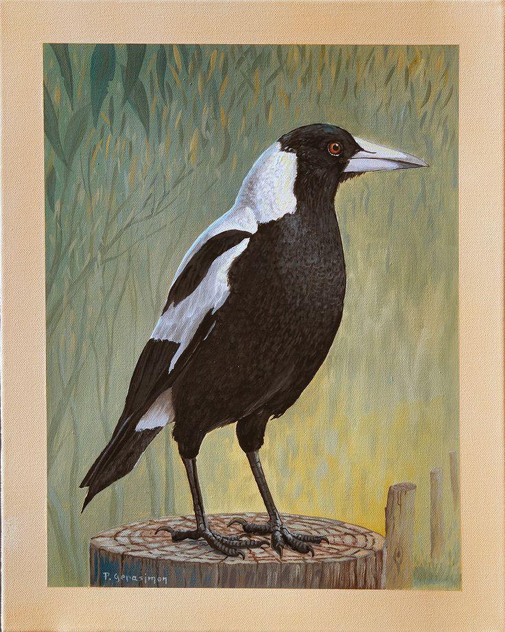 magpie.JPG (800×1002)
