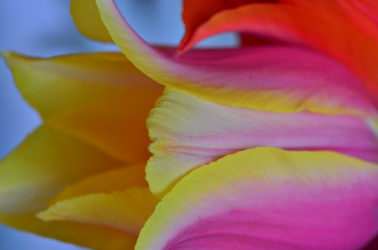 Sometimes, I like to get in close-(like always)- this was a great strong pointy tulip.