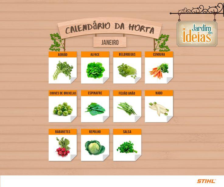 Veja quais verduras e legumes são ideais para cultivo em janeiro!