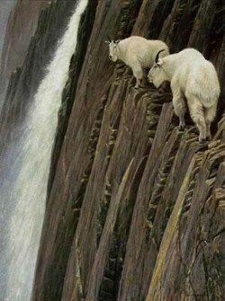 Beautiful shot of mountain goats. Yikes it really reveals how high they are.