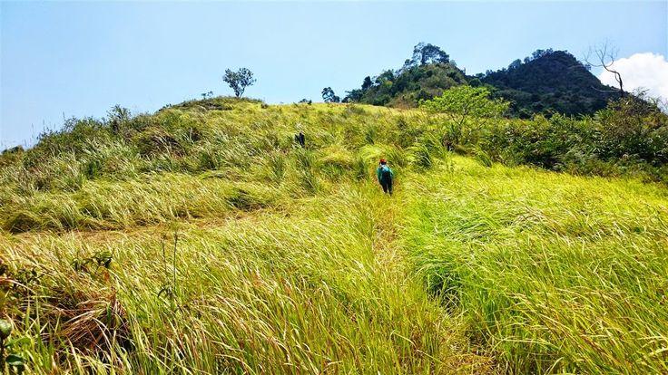 Image result for padang ilalang