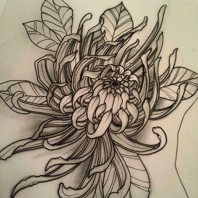 Chrysanthemum Flower Line Drawing : Best images about flowers on pinterest to be lotus