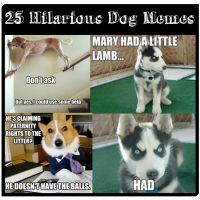 25 of the Most Hilarious Dog Memes on the Interwebs