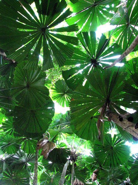 Cape Tribulation Rainforests, Australia