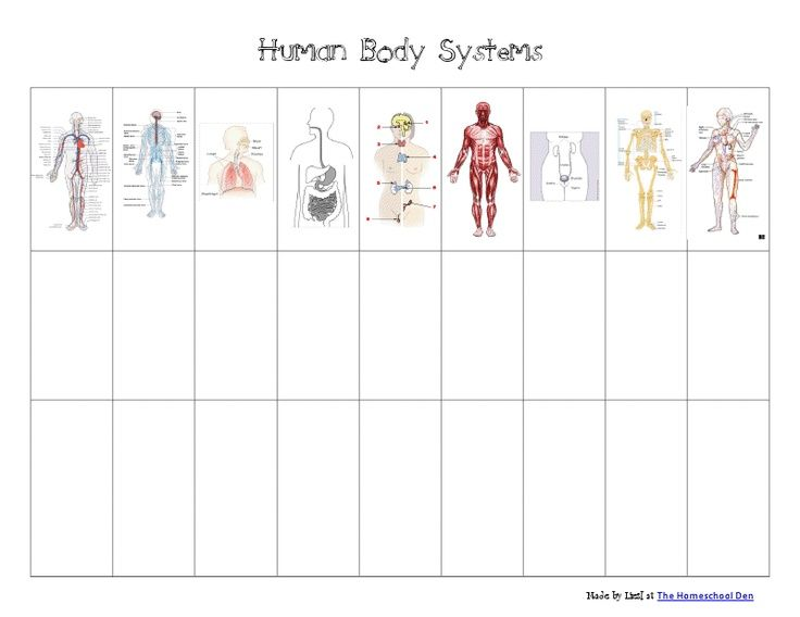 Body Systems Foldable   Human Body Systems Chart.pdf ...