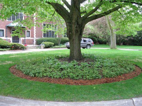 Garden Ideas Edmonton best 25+ landscape around trees ideas on pinterest | landscaping