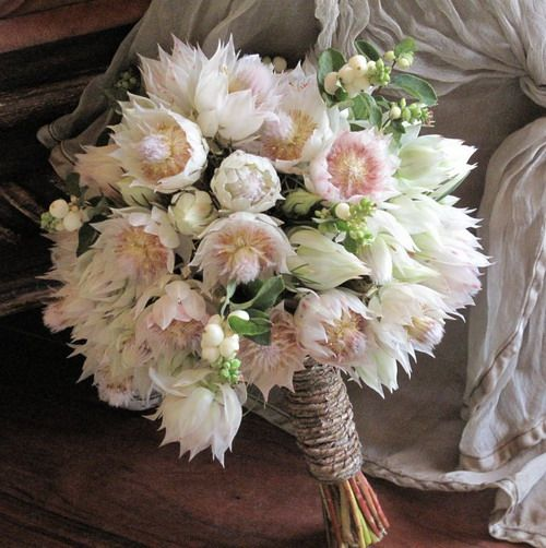 Serruria Blushing Bride - papery white flowers so pretty for #weddings 💒