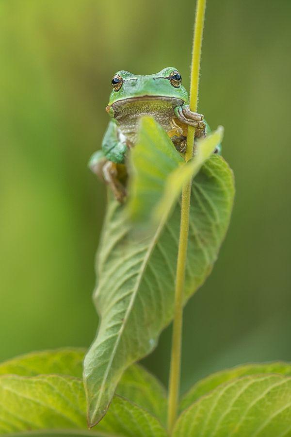 Ein Frosch Frosche Fotograf Schwarz Weiss