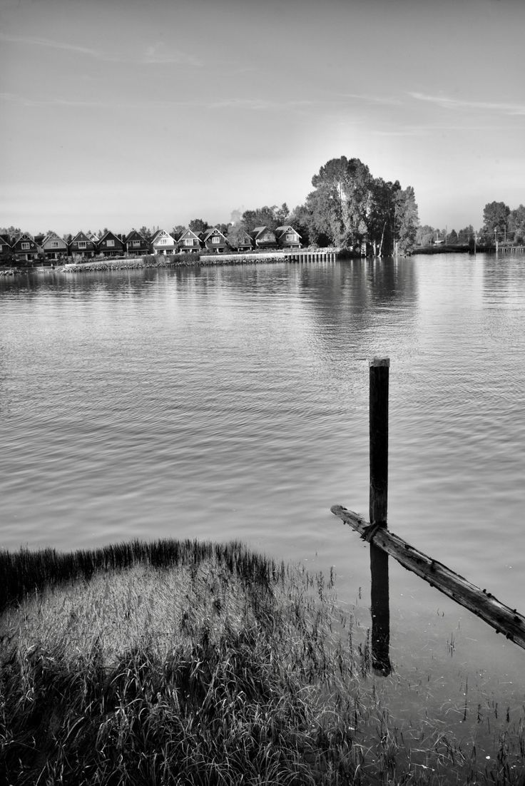 The Fraser River at New Westminster, B.C.