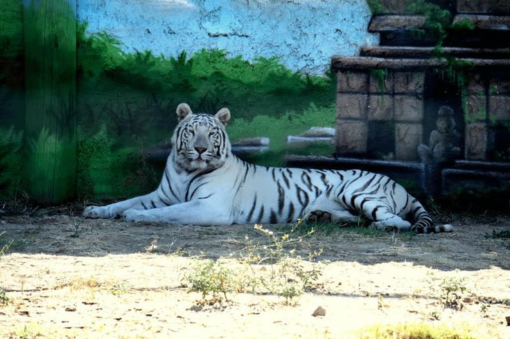 Athenian Zoological Park..