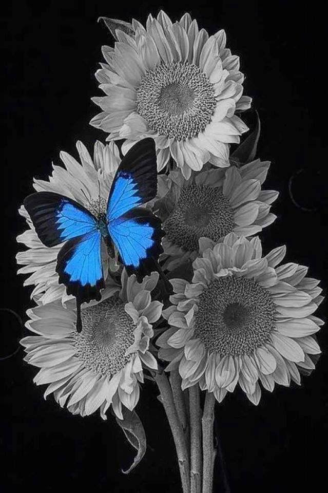Splash of butterfly