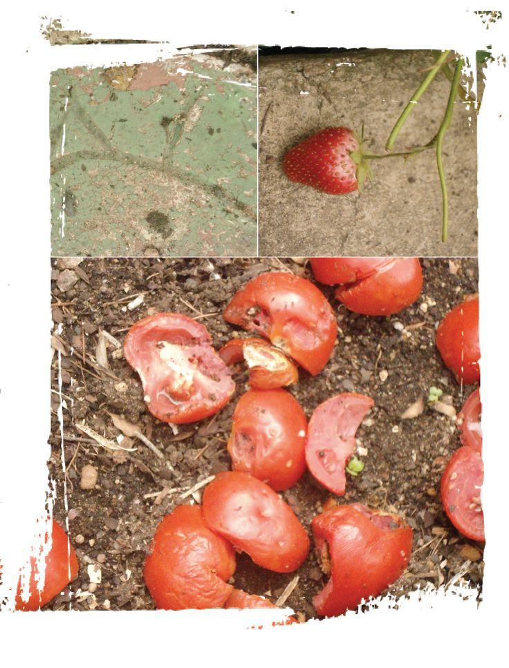 Summer plantings