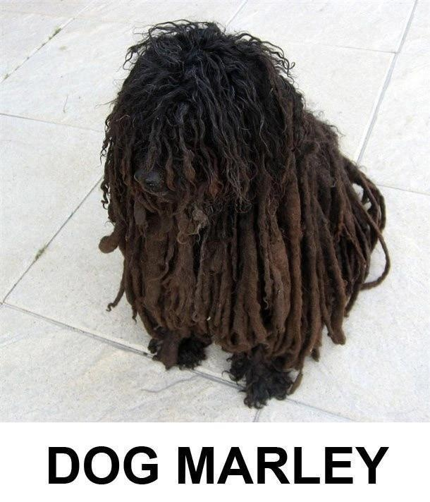 Dog Marley :D