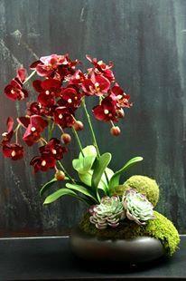 ¥10,000 胡蝶蘭の鉢物をイメージ