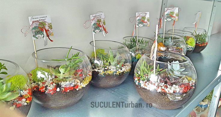 terariu15 cu plante suculente în bol 15cm - minigradini