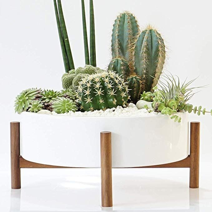 Mid Century Large Round Succulent Planter Bowl 10 Inch Pot With Wood Stand Coffee Table Centerpiece Succulent Planter Indoor Plant Pots Large Indoor Plants