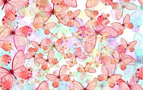 Butterfly Wallpaper Free Desktop Wallpapers Pc Backgrounds