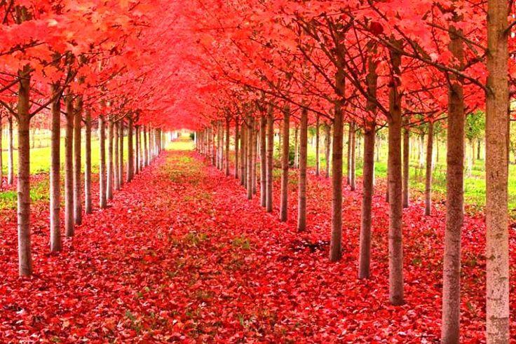 Gambar Musim Gugur Yang Manis