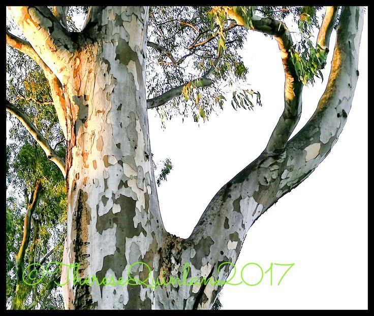 I love #trees! 💚💚💚
