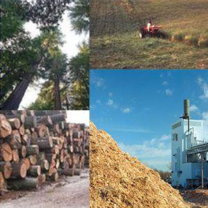 La biomasa, también llamada materia viva, es una fuente de energía renovable ecológica que tiene una gran posibilidad de futuro. Libera la energía que contiene al descomponerse o al degradarse. La biomasa natural se genera de forma espontánea en la naturaleza, por ejemplo la obtenida en la poda.