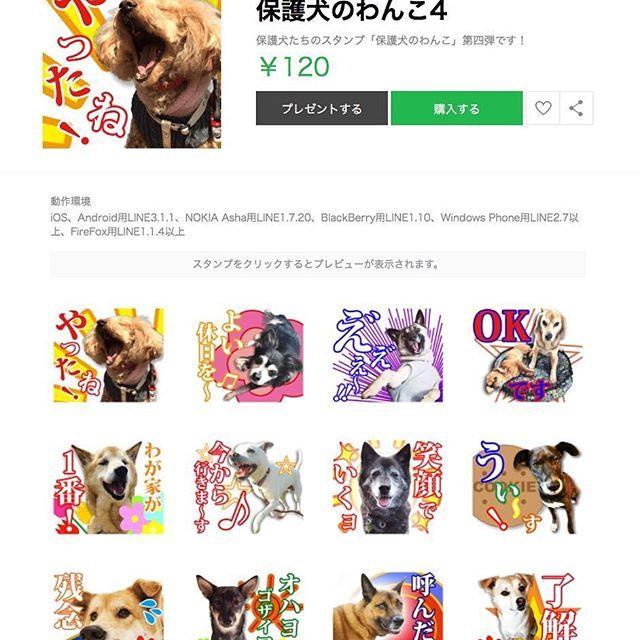 🐕💫 お待たせ致しました❗️ 「保護犬のわんこ」スタンプ、第4弾(グループ4)が発売になりました‼️ くどいですが(笑)今回もスタンプのリンク先等は最後に記載しますので、以下の項目に目を通して下さい。 🐕💫 (1)アカウント @hogoken_wanko を新設しました。ここで今後「保護犬のわんこ」プロジェクトからの報告などを行なっていきます。プロジェクトに関わっている方、プロジェクトに関心を持っておられる方は、フォローをお願いします。 (2)スタンプを使った活動の仕方については、以下のホームページに乗せていますので、読んでいない方は、こちらでお読み下さい。 (3)スタンプ発売と同時にメッセージカードの発行と「保護犬のわんこ」のホームページ(www.bbtv.jp)をスタートしています。これについては、別にpostしていますのでご確認下さい。 🐕💫 ✨スタンプ情報✨ このアドのプロフページのリンクからでも飛べます。 ーーーーーー 発売URL: http://line.me/S/sticker/1417517 スタンプ名: 保護犬のわんこ4 (Rescued dogs…