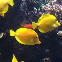 10 Best Saltwater Aquarium Fish for Beginners- compatibility tool included within text