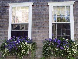 Lovely window boxes. by bernice