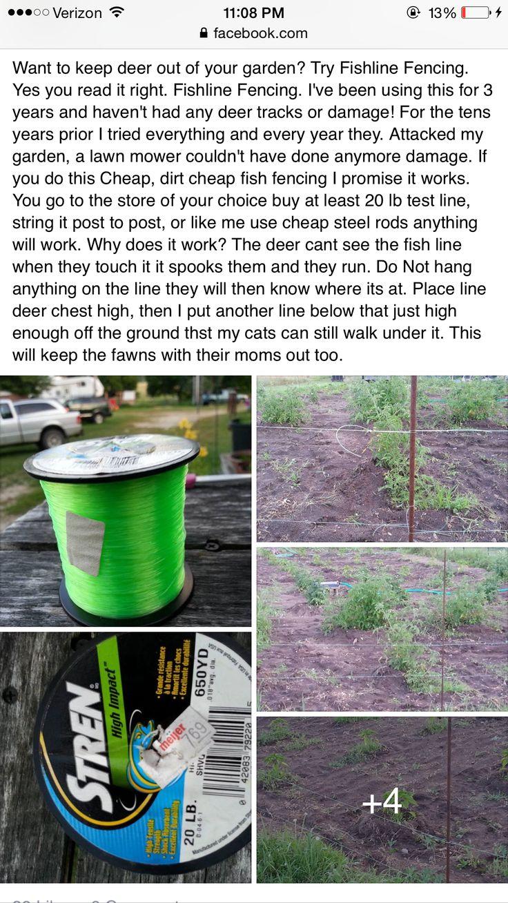 How do i keep deer out of my garden - Best 20 Deer Garden Ideas On Pinterest Deer Resistant Landscaping Deer Resistant Flowers And Deer Repellant