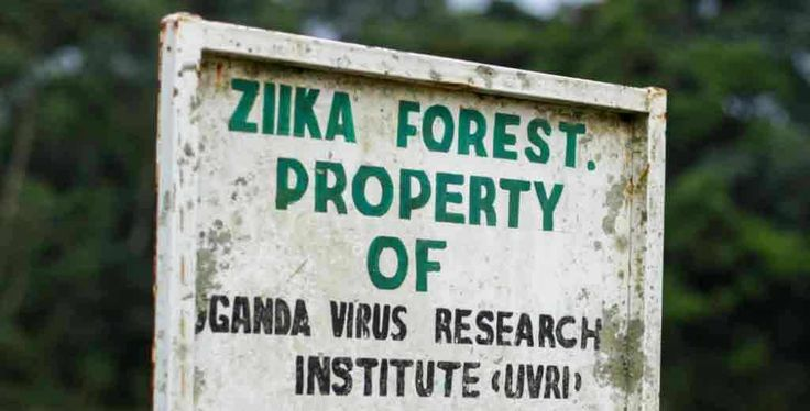 ZIKA FOREST, Uganda — The turnoff into the Zika Forest is easy to miss, just a…