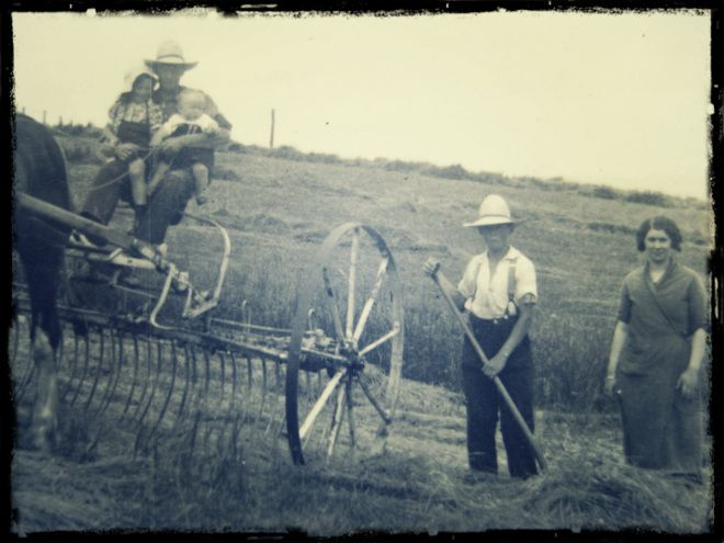 Haymaking at Maitland - Arthur Dove with younger daughters Joy and Dorothy. Tom Dove and Mabel Frank standing. ca 1937. Photo: Gray-Dove fam...