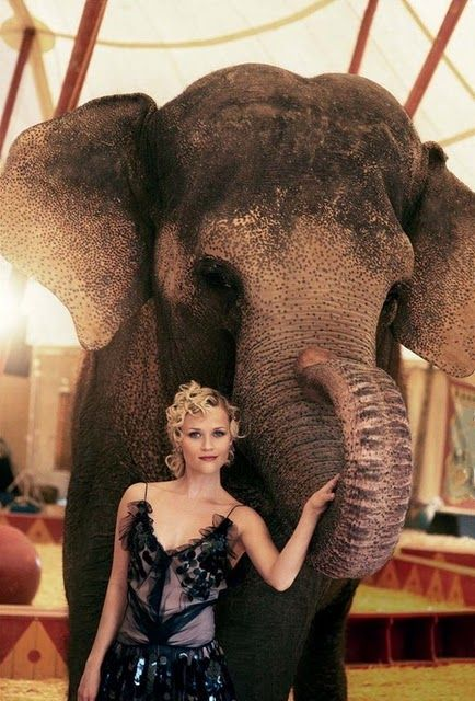 18 AND EAST: Water for Elephants