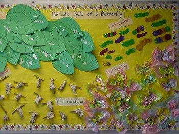 Butterfly Life Cycle Bulletin Board | Butterfly cycle