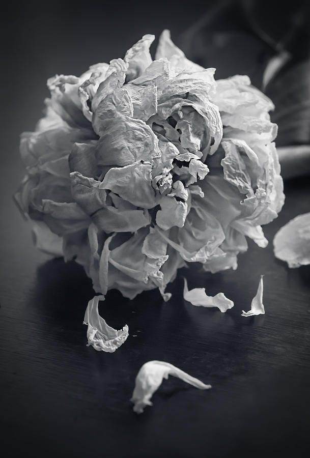 Stilllife Photograph - Frail Goodbye by Maggie Terlecki