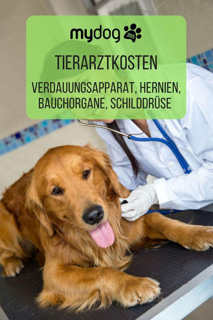 Tierarztkosten Verdauungsapparat Hernien Bauchorgane