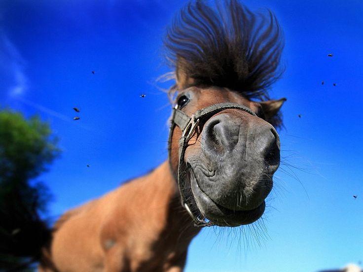PurpleJedi needs a horse