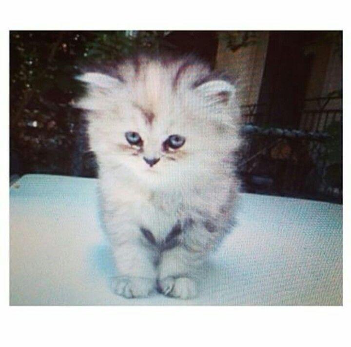 Trop cute:)