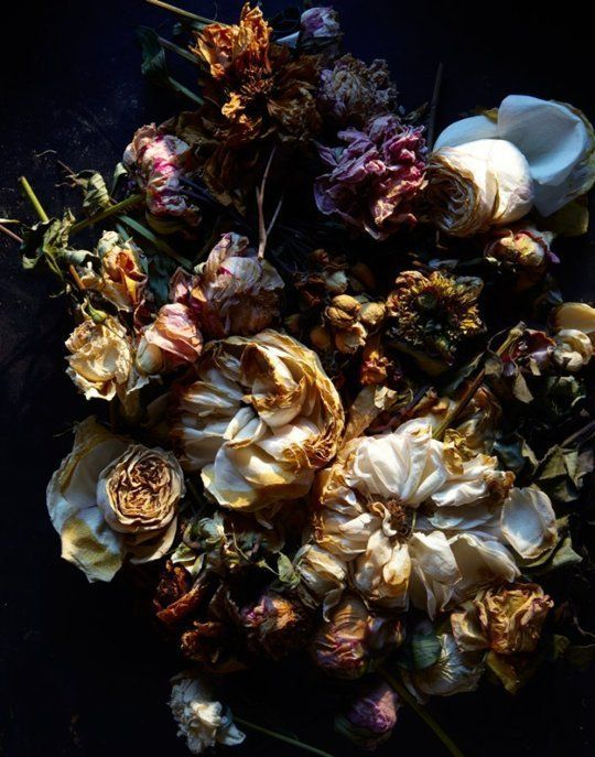 The 'Natura Morta' series by photographers Gentl and Hyers showcases flowers in varying stages of elegant decay. They're unusual and creepy and beautiful — click the link to the see the whole set.