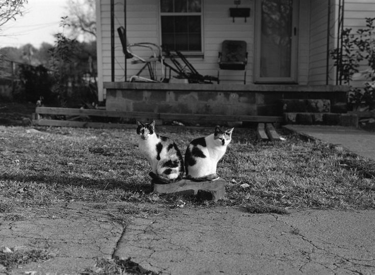 2 Cats in the City by Mark Steinmetz - Knoxville, Tennessee, 1991