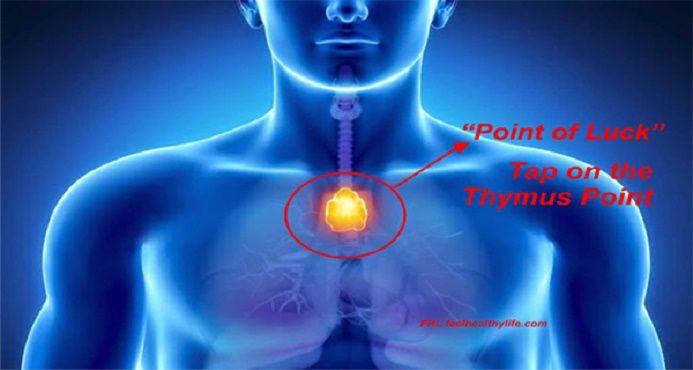 """Muitas pessoa não sabem que existe um órgão do corpo humano conhecido como """"ponto da felicidade"""". Seu nome verdadeiro é """"glândula timo"""". Em grego, thýmos, significa energia vital. Já diz tudo, não é?"""