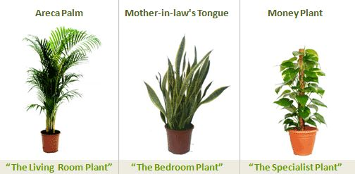 Best indoor 504 247 for the home pinterest best indoor plants plants and ted - Plants can improve ambience home ...