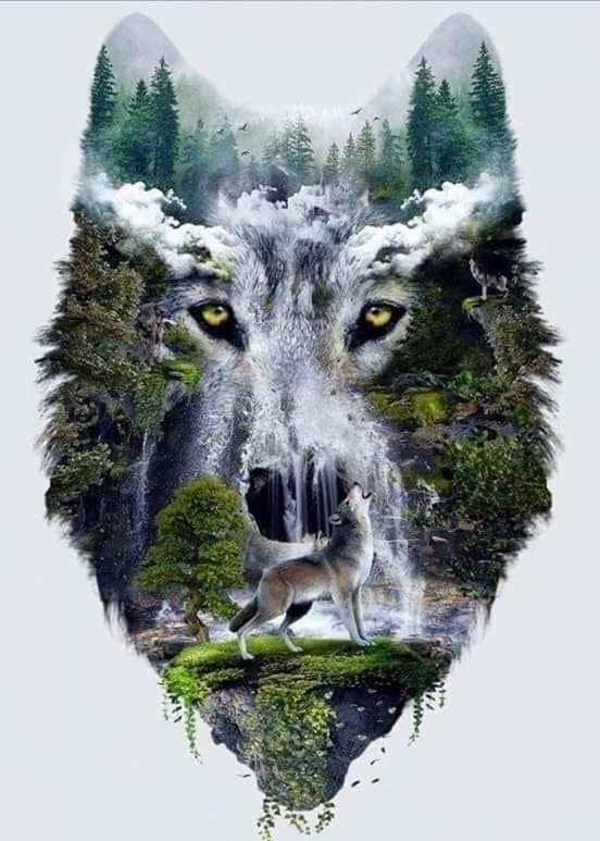 Spirit of the wolves | Beautiful creatures in 2019 | Wolf, Wolf