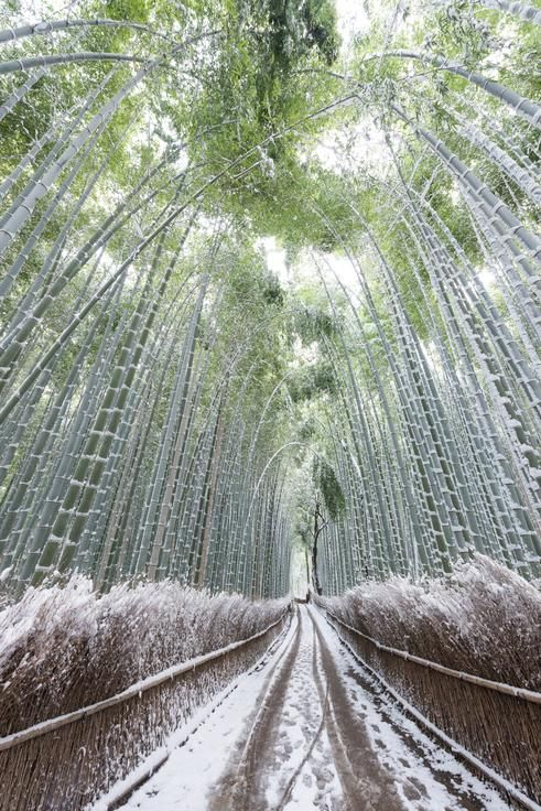 Covered Photo by Takahiro Bessho - 2016 National Geographic Travel Photographer of the Year