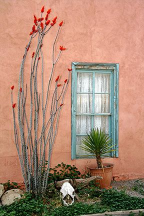 Tularosa, New Mexico (Ocotillo in bloom, the ubiquitous cow skull, stucco, blue trim, and yucca in a pot...timeless NM)
