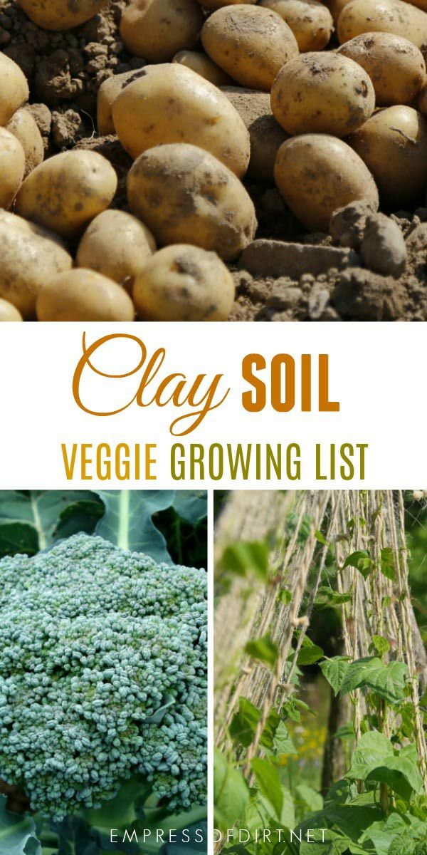10 Best Vegetables For Clay Soils Clay Soil Home Vegetable