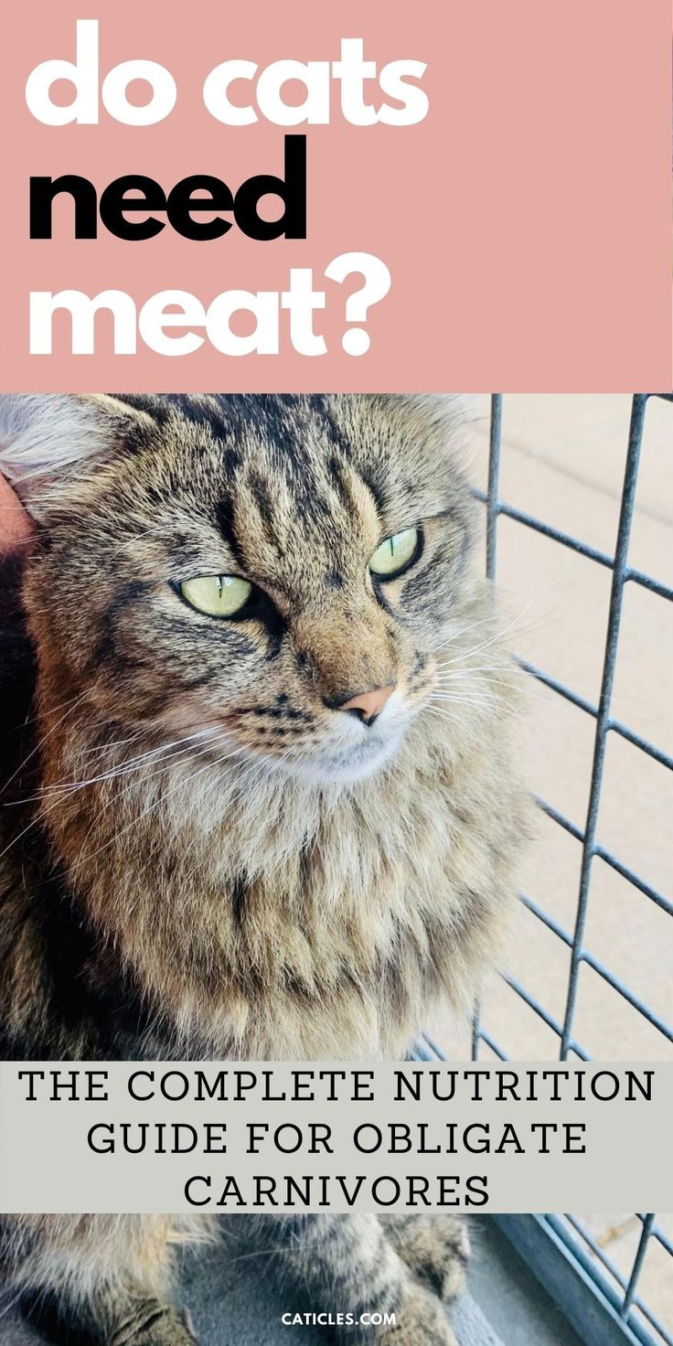 Do Cats Need Meat? Can Obligate Carnivores Be Vegan